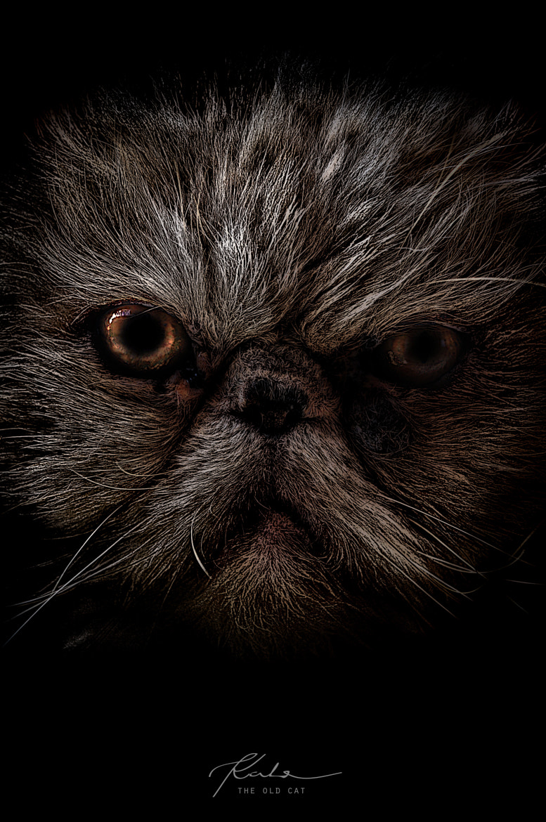 Photograph the old cat by kata ragg on 500px