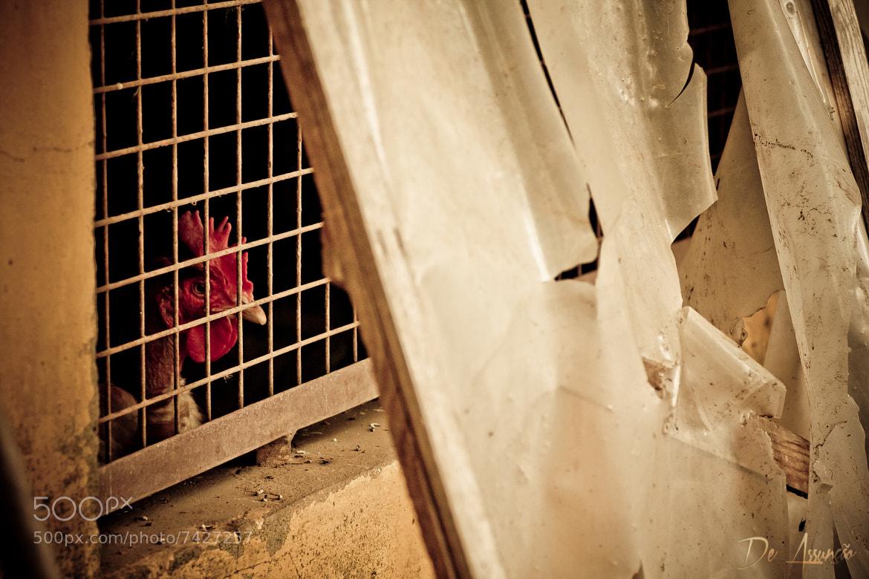 Photograph Désespoir by Damien De Assunção on 500px