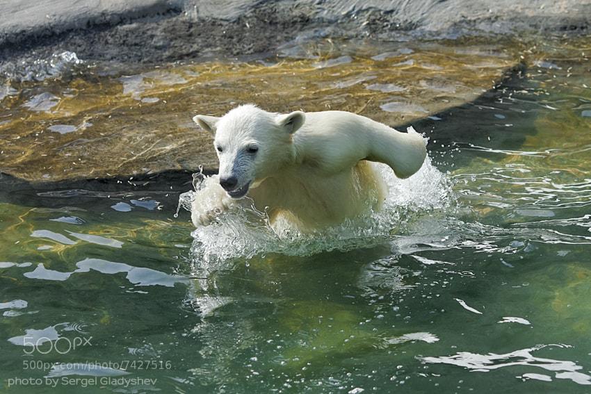 Photograph freestyle by sergei gladyshev on 500px