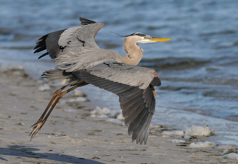 Photograph Take Off by Harry  Eggens on 500px