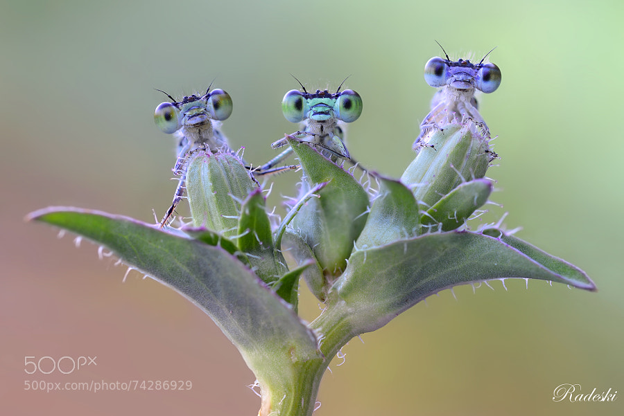 Photograph Le tre sorelline by Roberto Aldrovandi on 500px