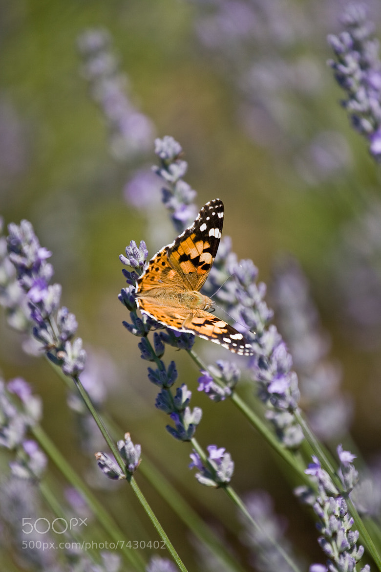 Photograph summer butterfly by Igor Klajo on 500px