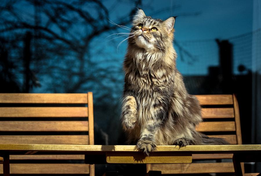 Jäger by Thorsten G. on 500px.com