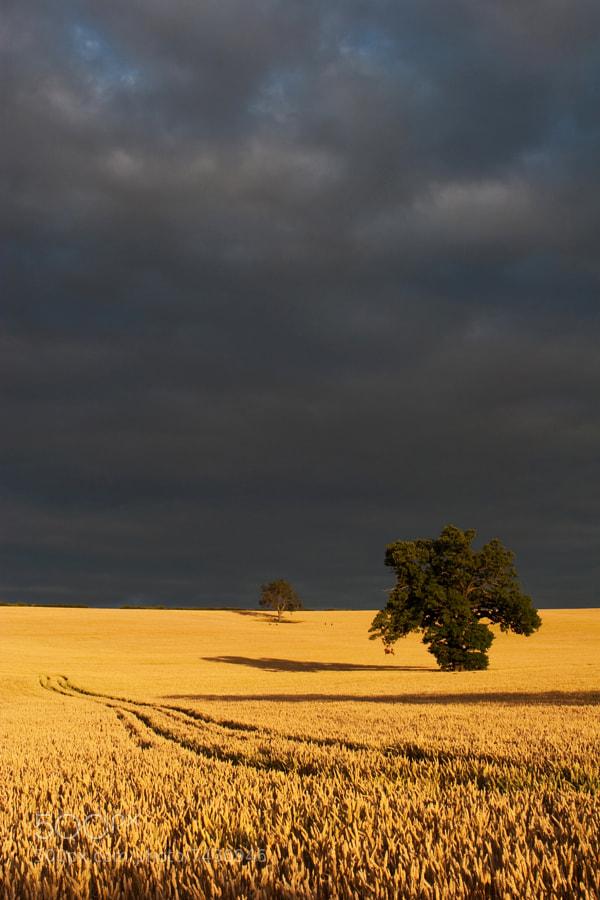 After the rain Northamptonshire,UK
