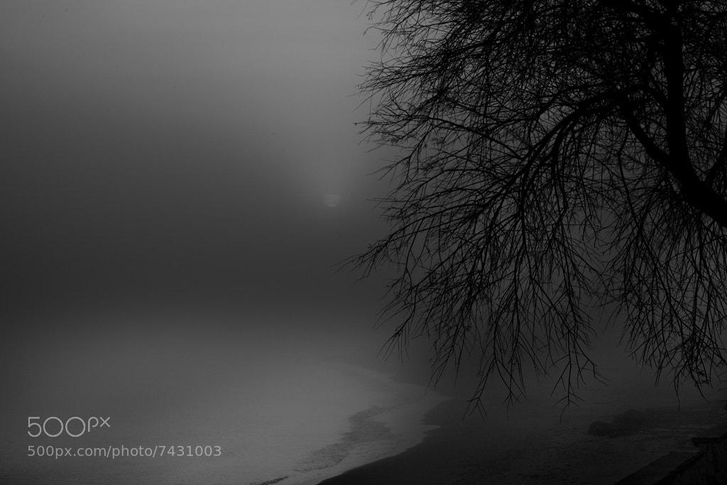 Photograph fog at dawn by Antonio Torkio on 500px
