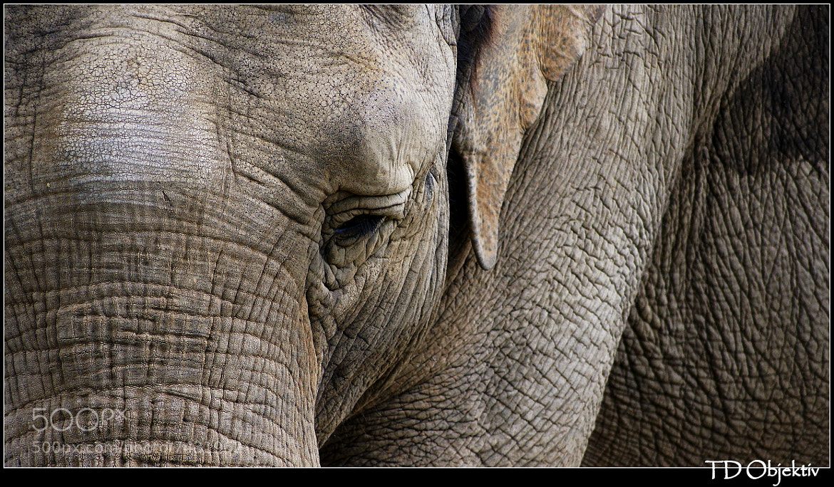 Photograph Elephant by Tasja Moelans on 500px