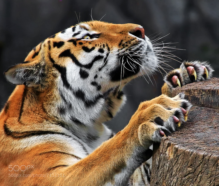 Photograph Claws by Klaus Wiese on 500px