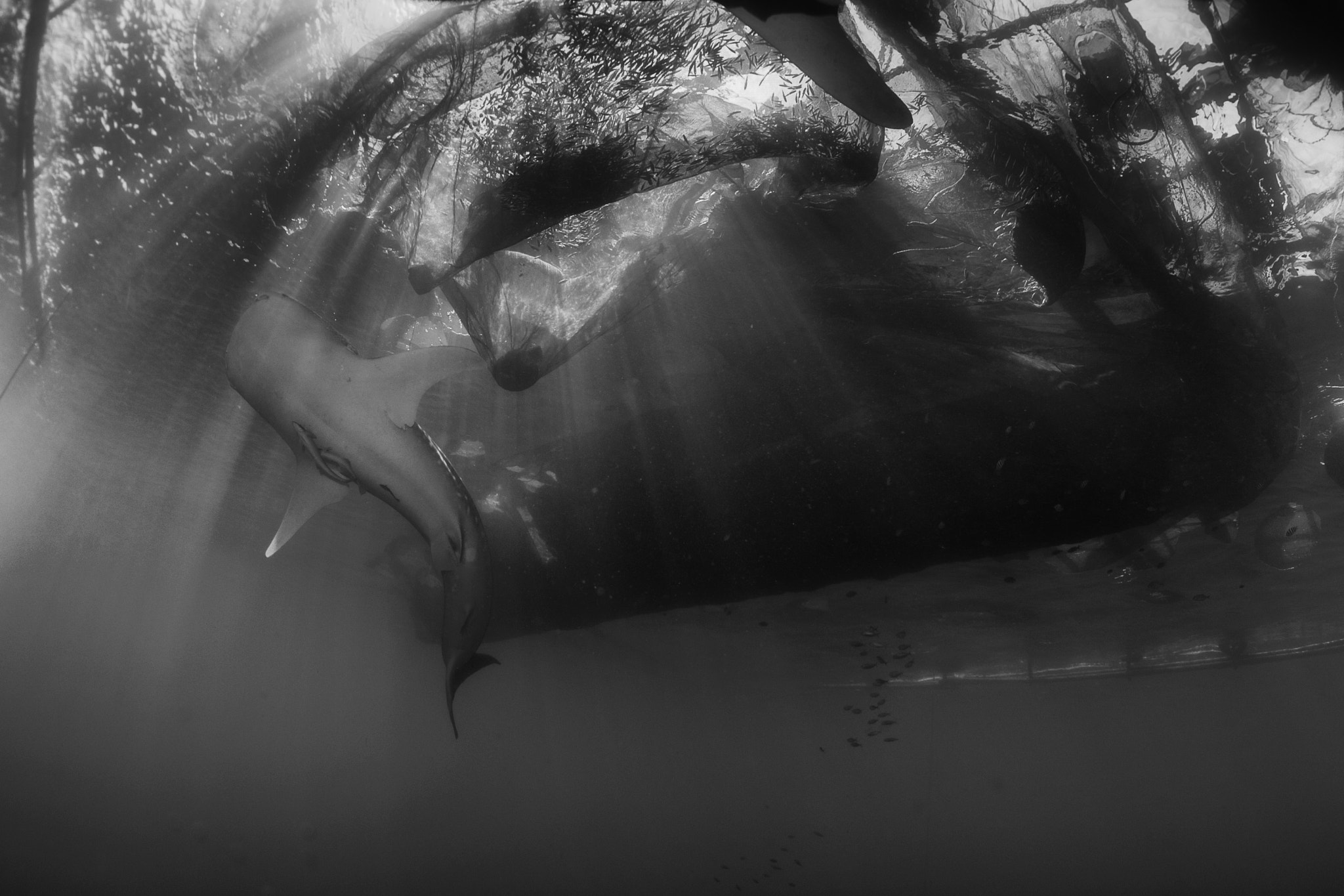 Photograph Underwater Rays by Andrea Izzotti on 500px