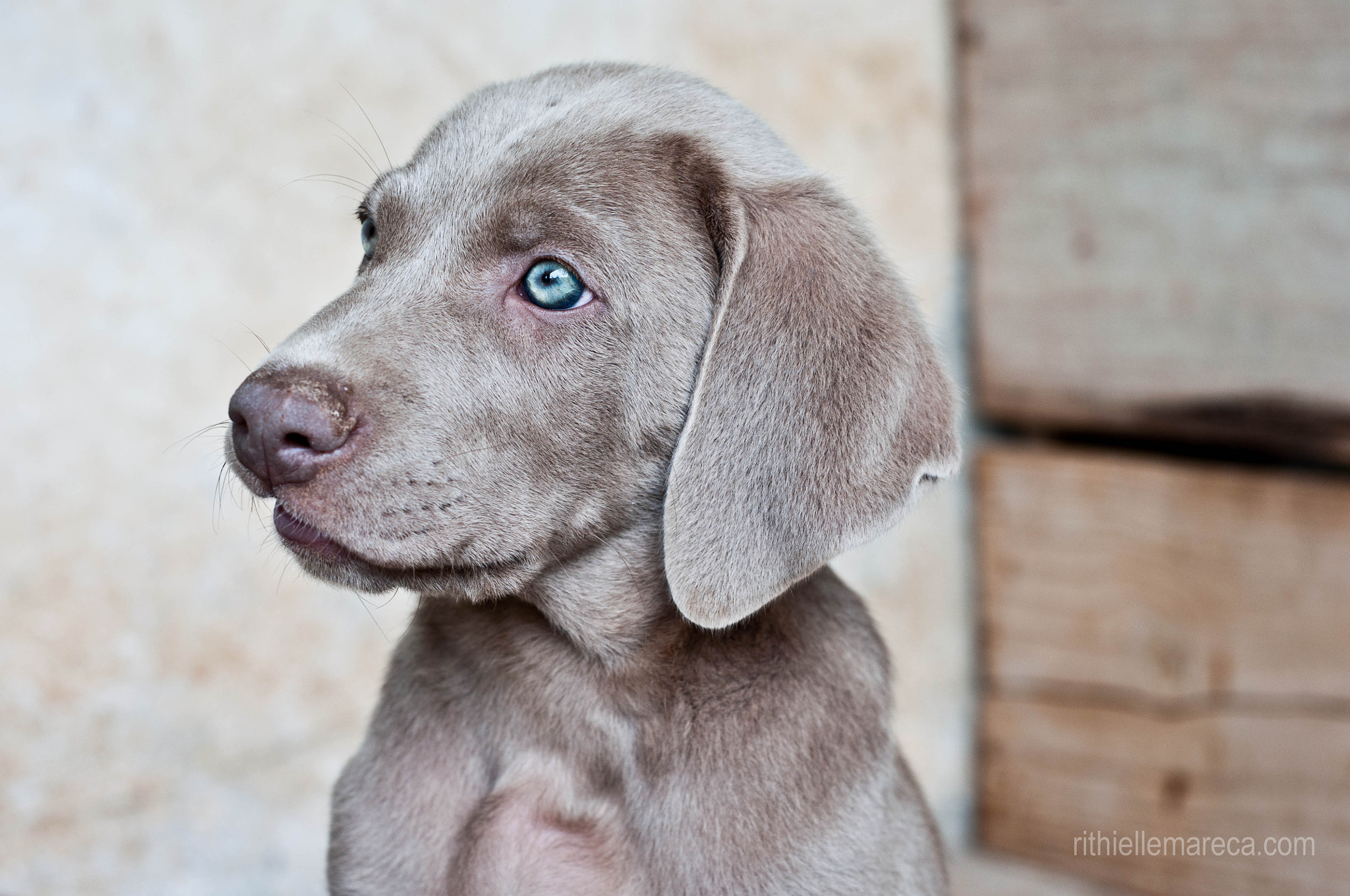 Photograph Puppy by Rithielle Mareca on 500px