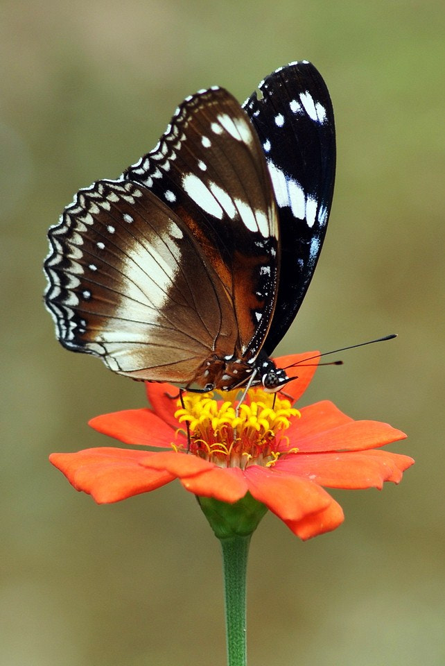 Photograph butterfly & flower by Agung Harsono Pirmo on 500px