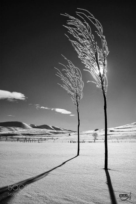 Photograph None by Ali Shokri on 500px
