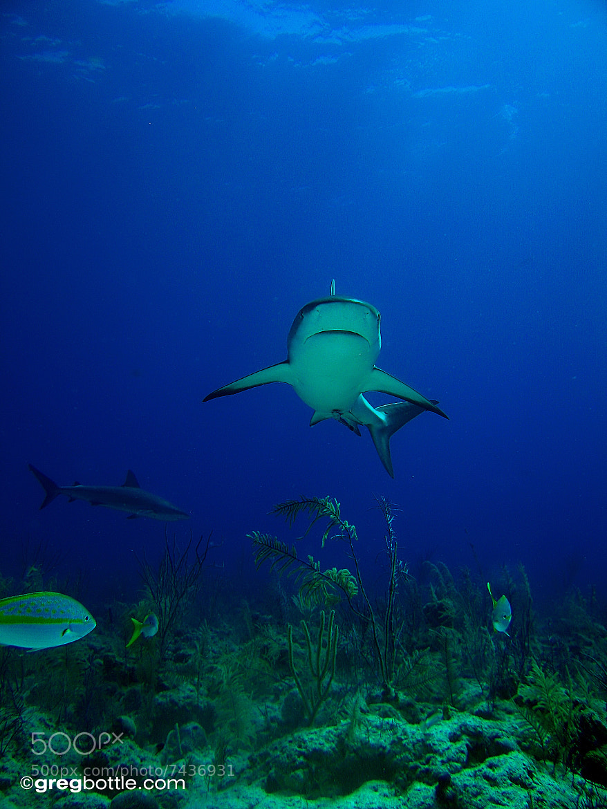 Photograph Portrait of a Shark by Greg Bottle on 500px