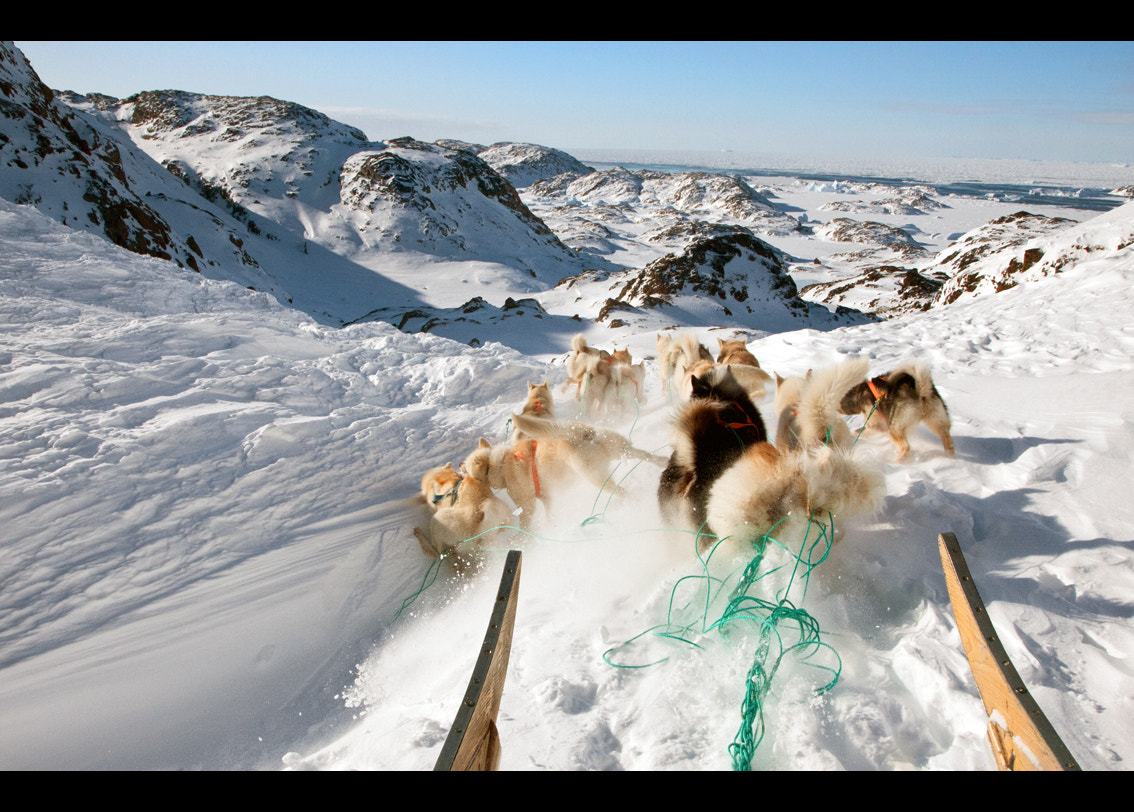 Photograph FREE YOUR SOUL, EXPERIENCE GREENLAND SLED DOG WILD ADVENTURES! by Moreno Bartoletti on 500px