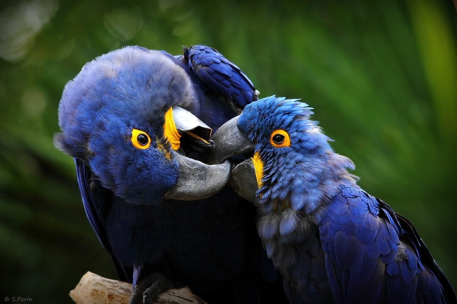 Photograph French Kiss  by Stephane PERIN on 500px