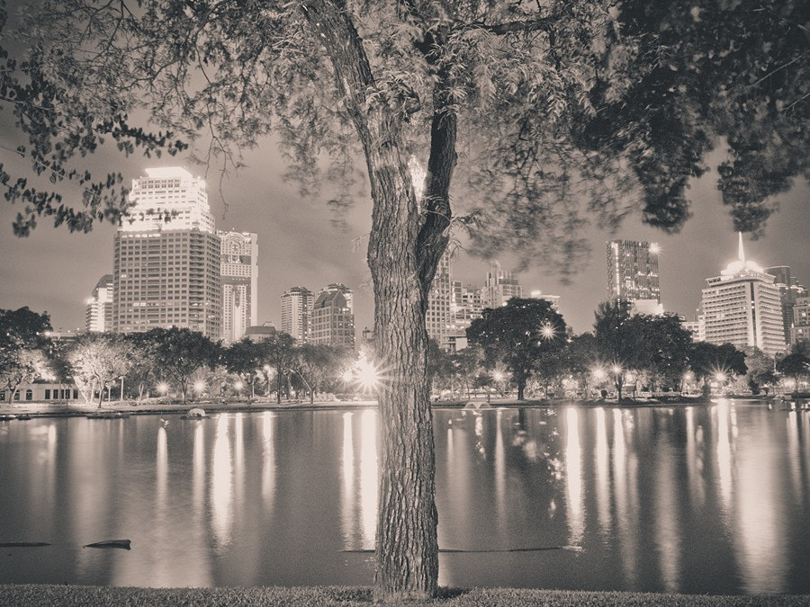 Photograph The city is like a tree. by Note Pattarachet on 500px