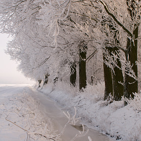Sneeuw en zon by Detty Verbon (dettyverbon)) on 500px.com