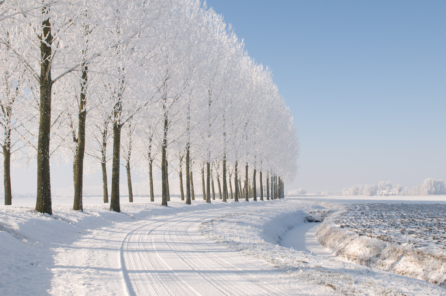 Photograph Bomen  by Detty Verbon on 500px
