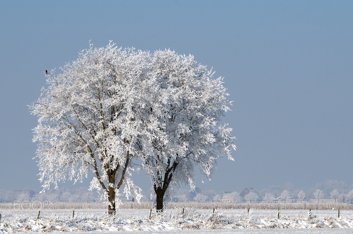 Photograph Sneeuw Vorst by Detty Verbon on 500px