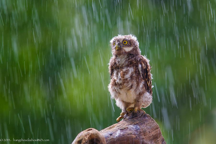In the rain by David McCann on 500px.com