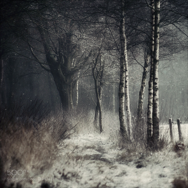 Photograph Winter Tale by J-W v. E. on 500px
