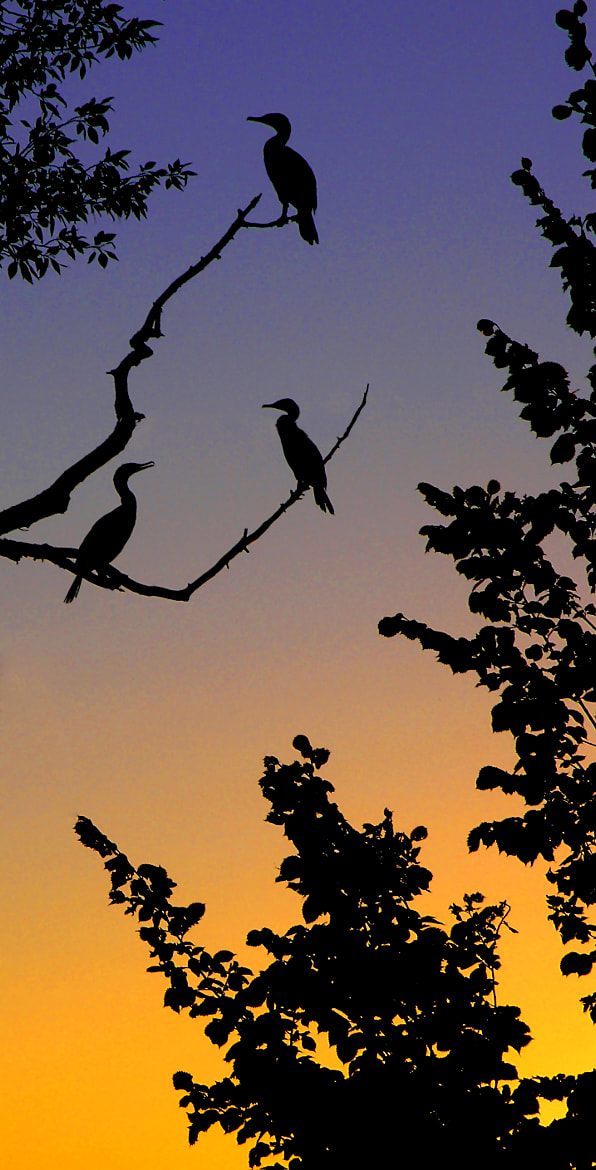 Photograph Eventide Silhouette by Stan Petersen on 500px