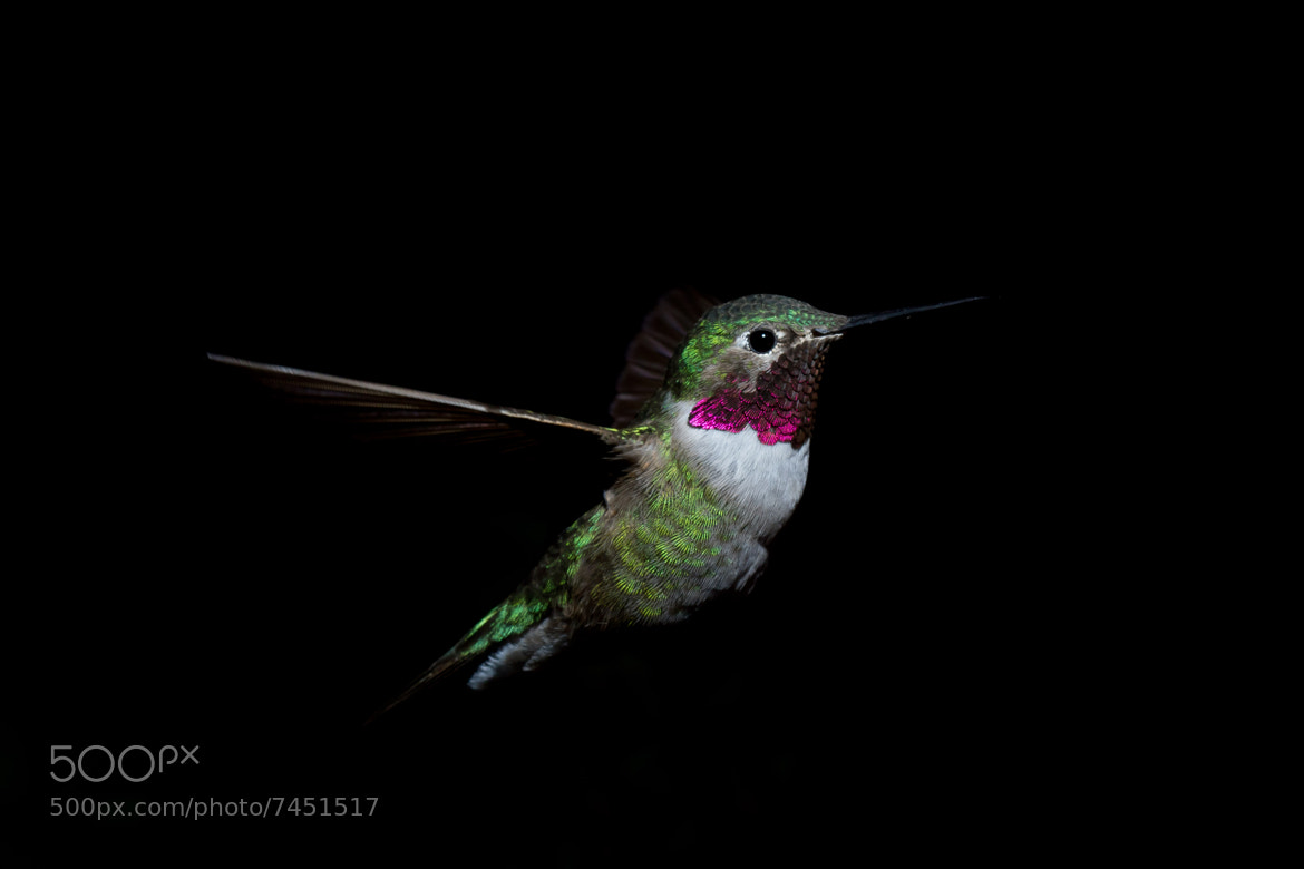Photograph uno mas hummer by L. Richmond on 500px