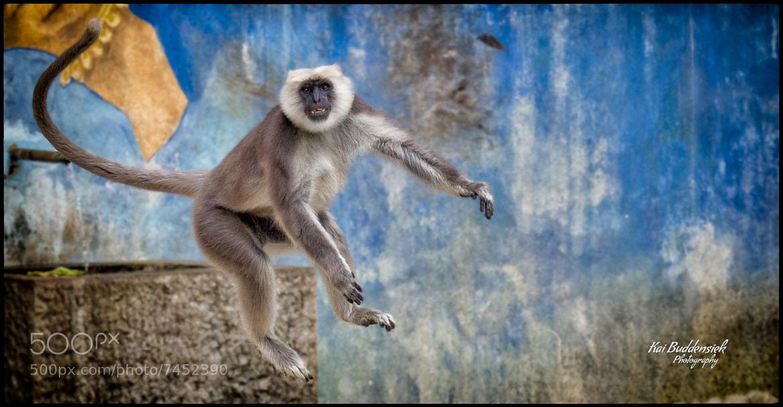 Photograph Jump ! by Kai Buddensiek on 500px