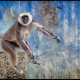 Jump ! by Kai Buddensiek (KaiBuddensiek)) on 500px.com