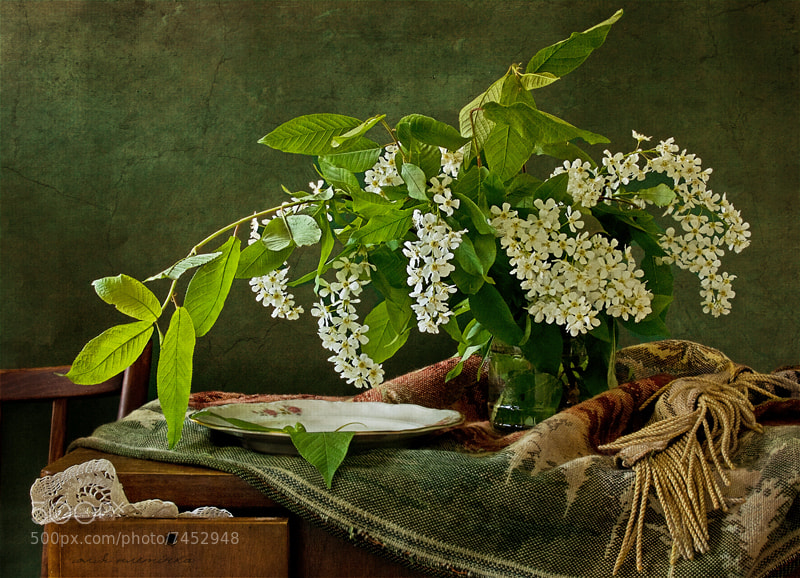 Photograph spring lace by Yulia Pletinka on 500px