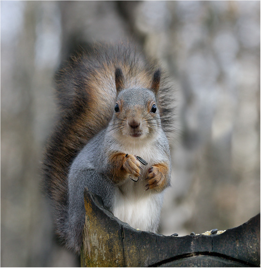 Photograph Do you want a nut? by Victoria Ivanova on 500px
