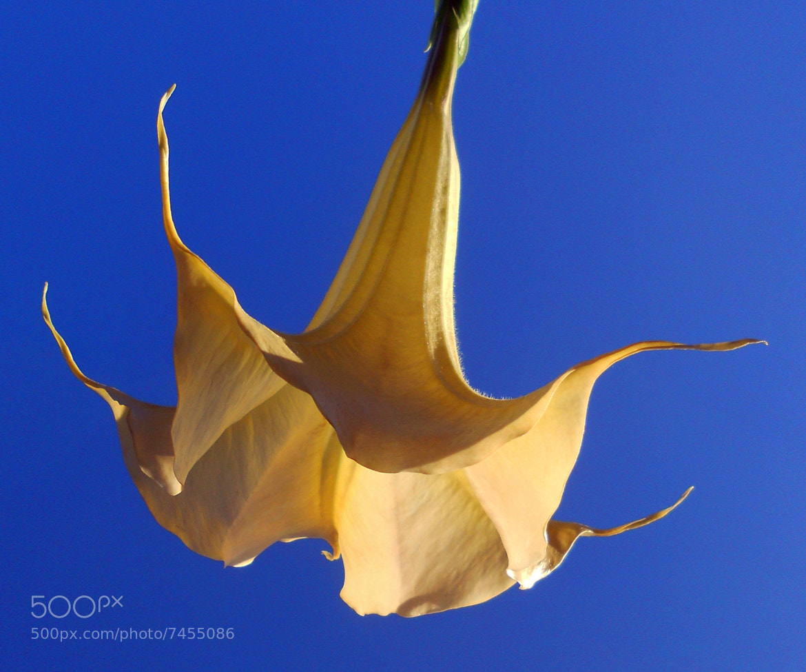 Photograph Bell in the Sky by N Lester Ellorin on 500px