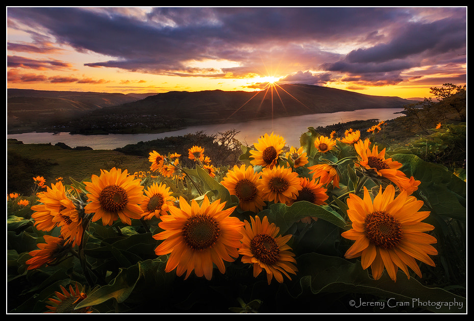 Photograph Rowena Morning... by Jeremy Cram on 500px