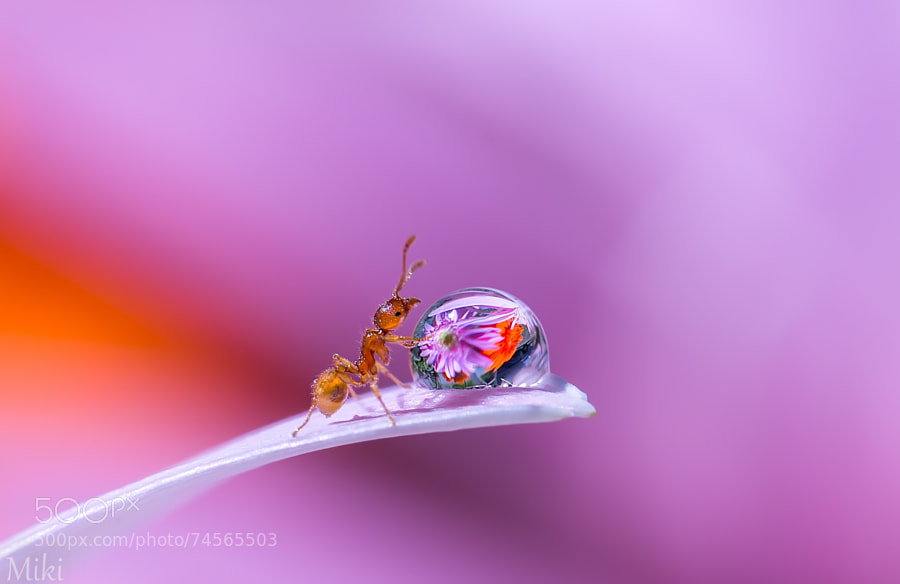 Photograph How lucky am I ! by Miki Asai on 500px