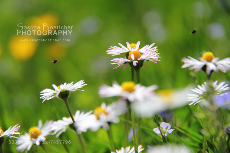 Photograph Daisy Air Space  by Sascha Böttcher on 500px