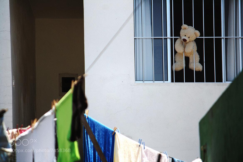 Photograph Suicide Bear by Renan Luna on 500px
