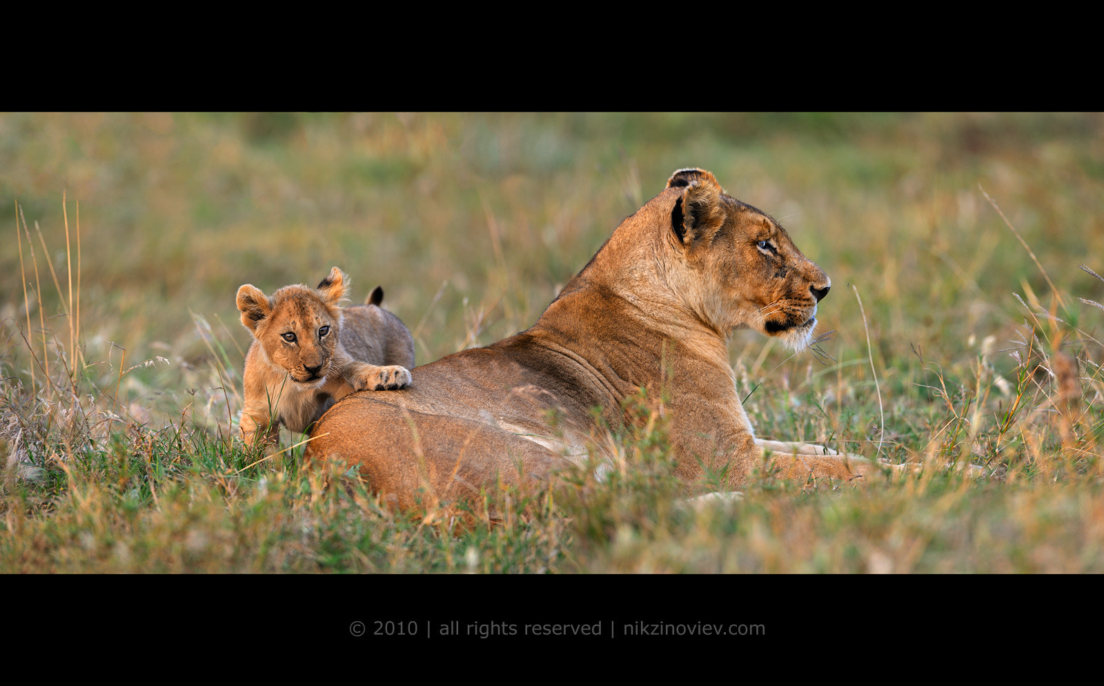 Photograph Isn't it great, when you have someone to lean on! by Nikolai Zinoviev on 500px