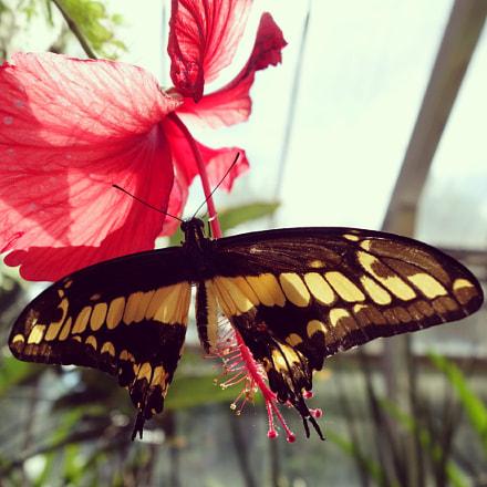 Butterfly~