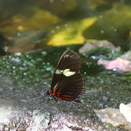 Butterfly standing on a stone