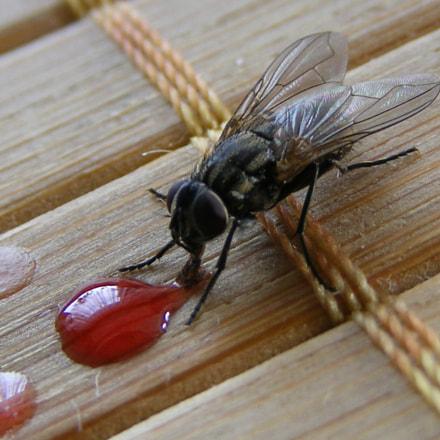 Fly. :>