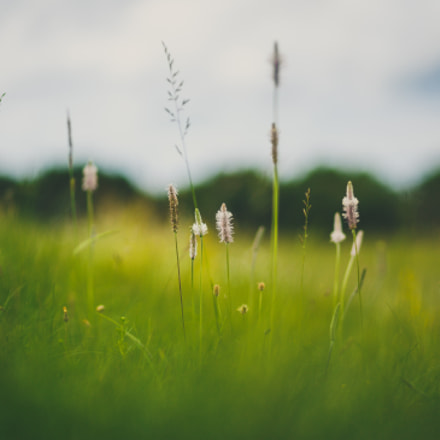 Nature of Belarus, flowers