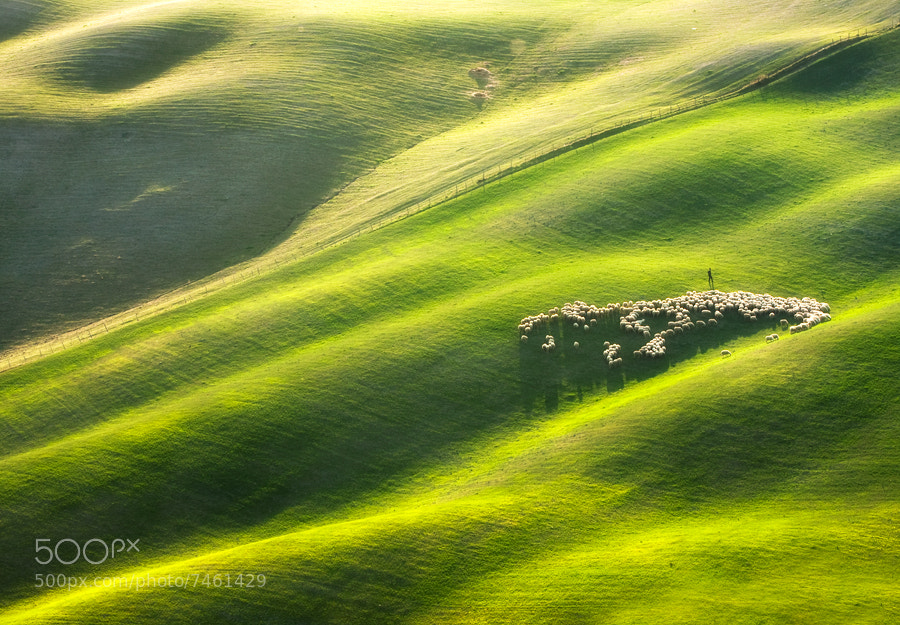 Photograph Shepherd with 300 ... by Marcin Sobas on 500px