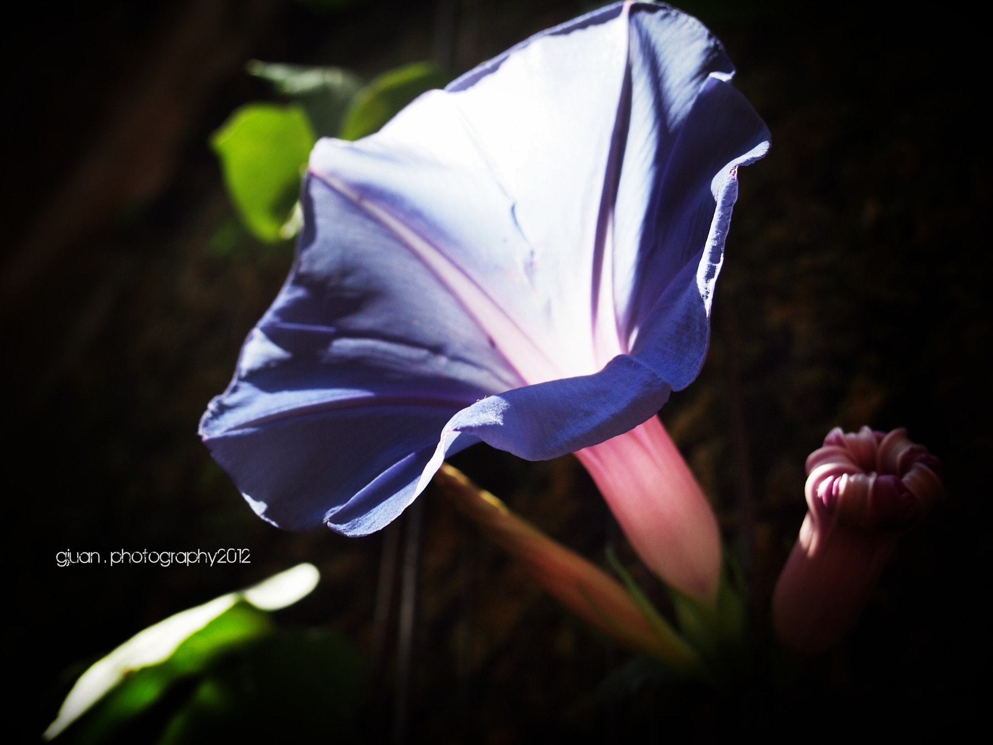 Photograph Morning in Glory  by Candy Juan on 500px