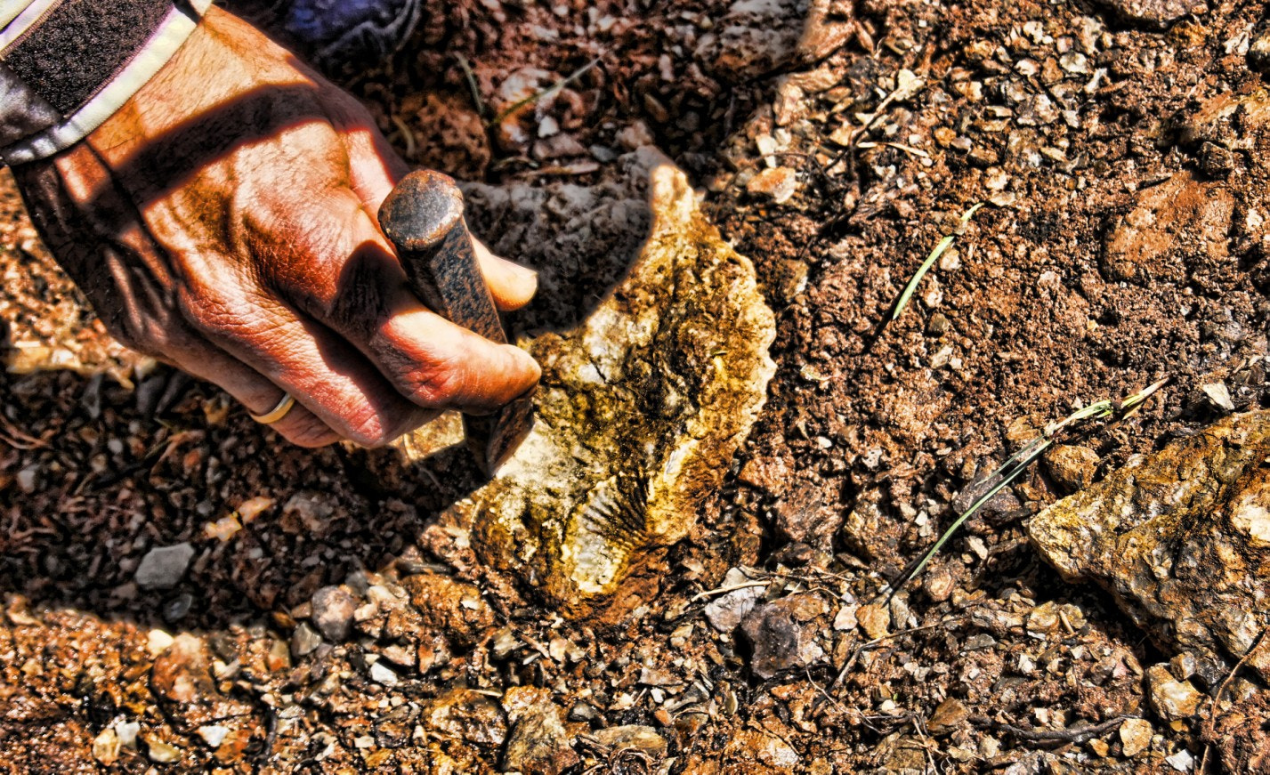 Photograph Hand, gold, iron and fossil. by Hikergoer H.G. on 500px
