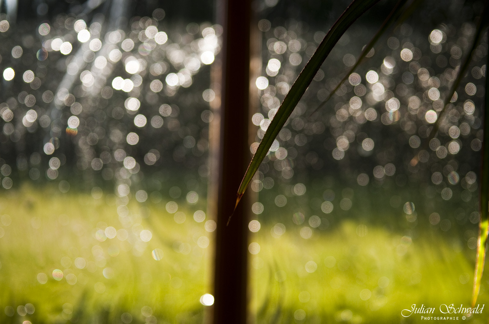 Photograph Bokeh Rain by Julian Schwald on 500px