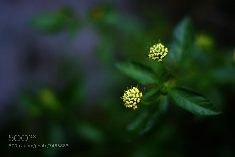 Photograph Name the flower... by Basil Arackal on 500px