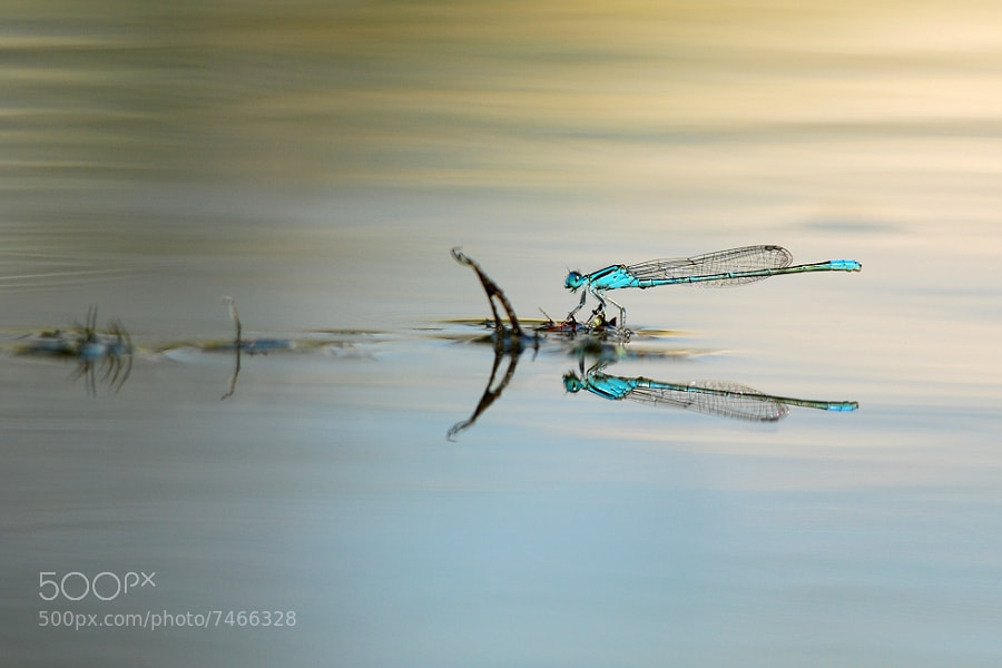 Photograph mirror2 by Tong Huang on 500px