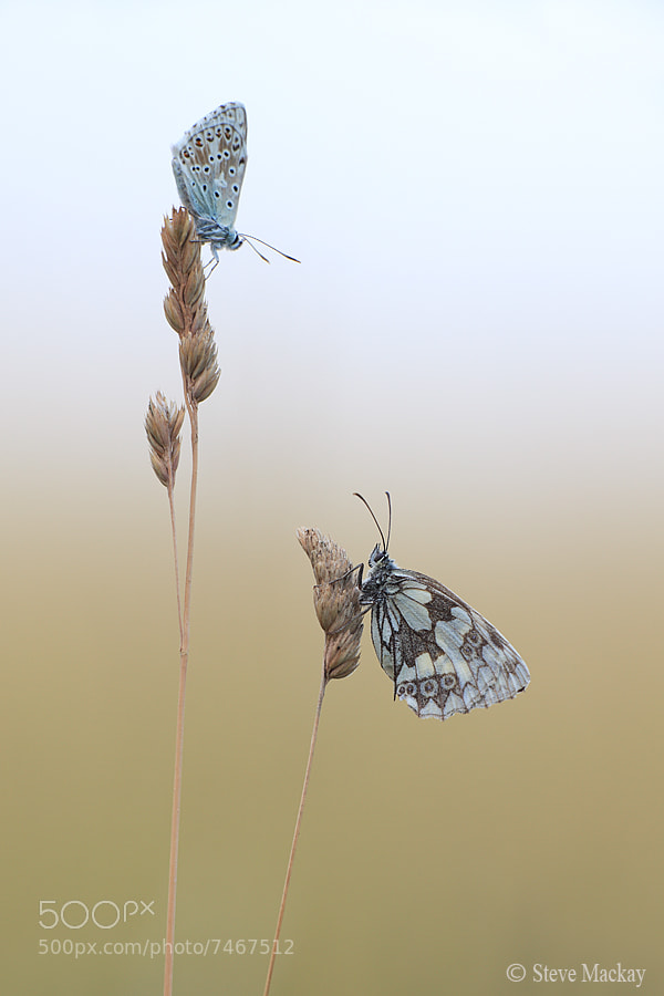 Photograph Smaller but Taller by Steve Mackay on 500px