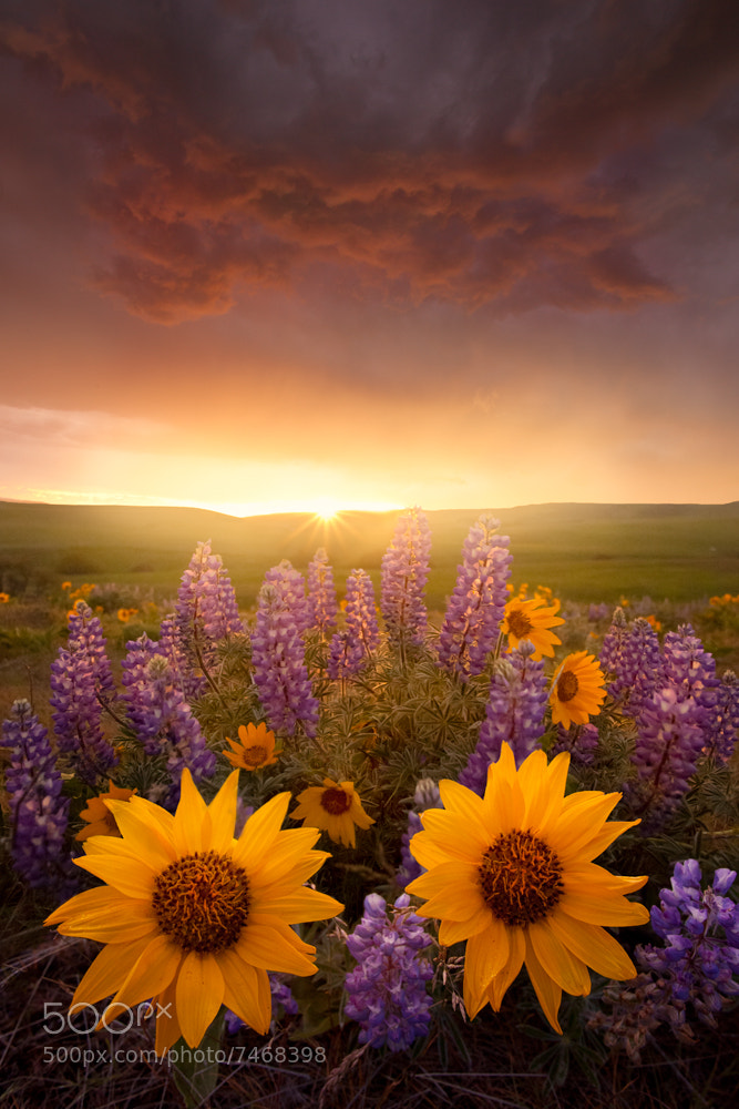 Photograph Spring Blooms by Lijah Hanley on 500px