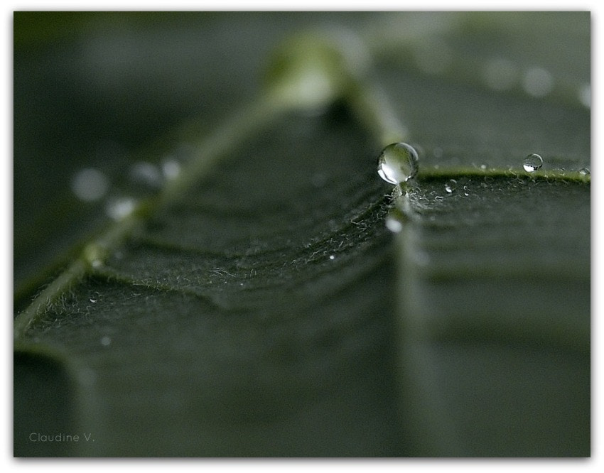 Photograph ** by Claudine V. on 500px