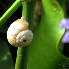 Snail by Aml Eshniwra (AmlEshniwra)) on 500px.com
